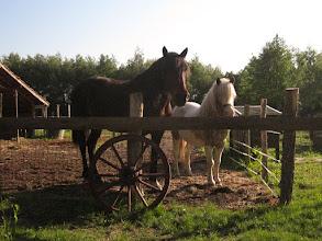 Photo: De paarden op de camping: Pistache en Leo