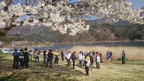 会場のシッコゴ公園は桜満開