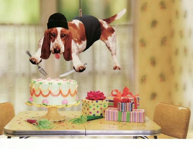 Funny Dog Birthday Pictures