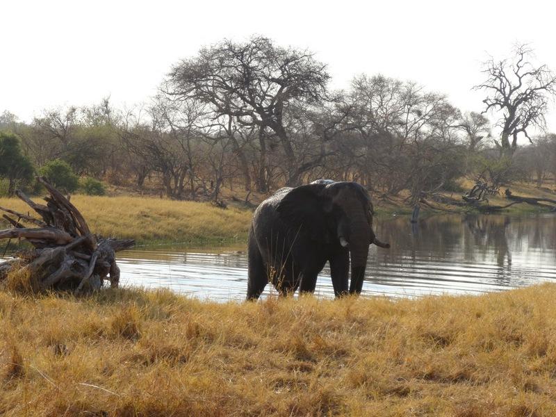 Botswana - DSC00610.JPG
