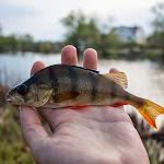 20140417_Fishing_Shpaniv_006.jpg
