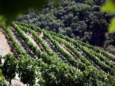 Vineyards in the Douro Valley in P
