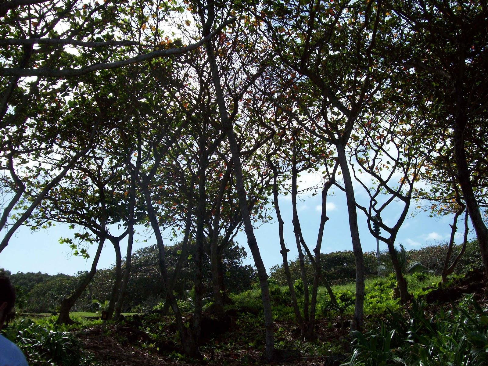 Hawaii Day 5 - 114_1542.JPG