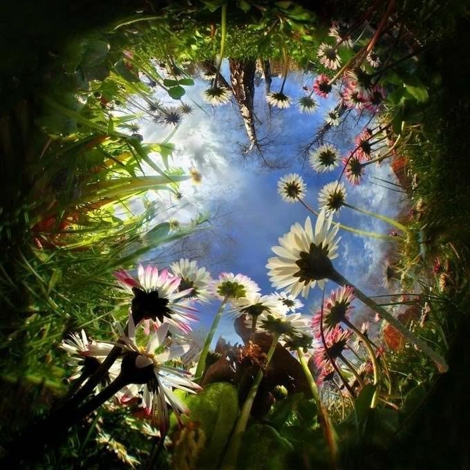Magical Flowers, Magic And Spells