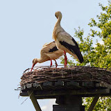 Vogels en dieren - IMG_7270.JPG