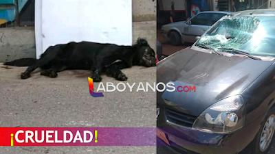 Lanzan un perro vivo desde un puente y cae sobre un carro, el peludo murió