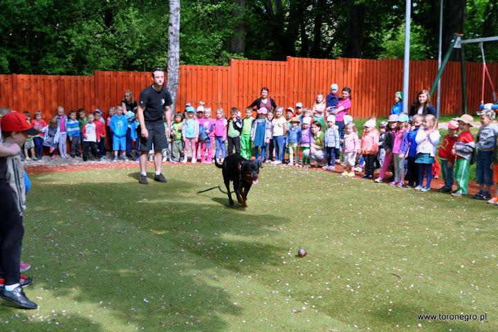 Aportowanie piłki przez dużego psa