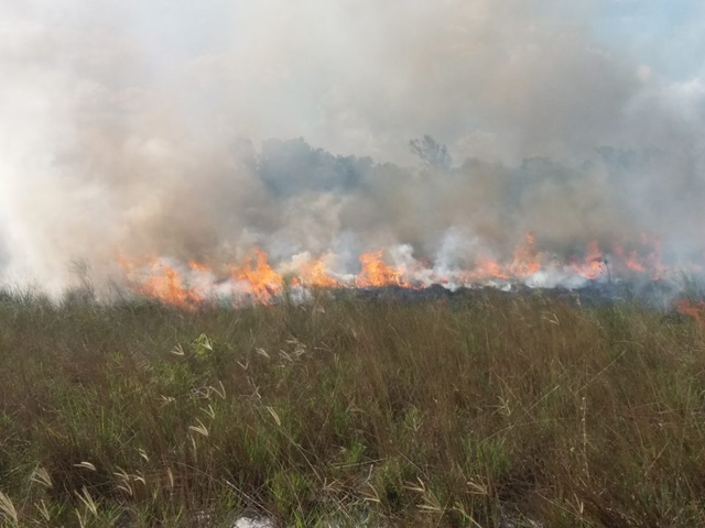 Regular fires have long helped maintain healthy grasslands worldwide. But rapid expansion of industrial farming in Africa, Asia, Central America and South America has resulted in a nearly 25 percent decrease in fires and the loss of habitat for endangered lions and other large mammals. Photo: Center of Environmental Monitoring & Fire Management, Federal University of Tocantins, Brazil