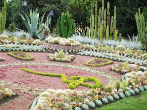 Photo: 25 tys. kaktusów w Carl Johan Park w Norrkoping