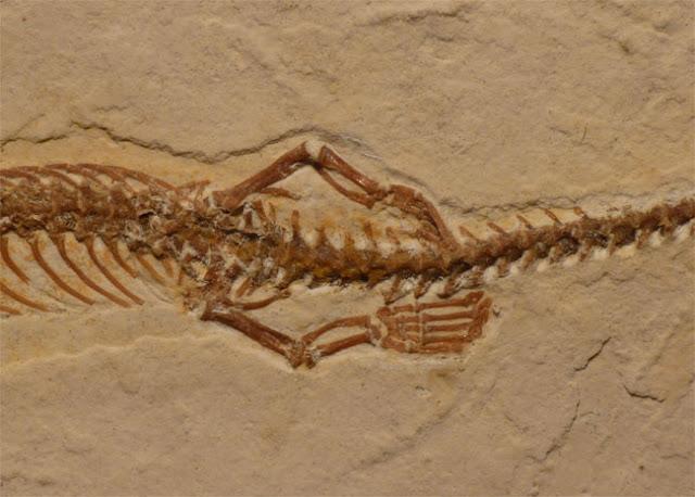 fosil ular berkaki empat