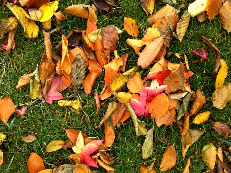 autumns last smile, colourful leaves