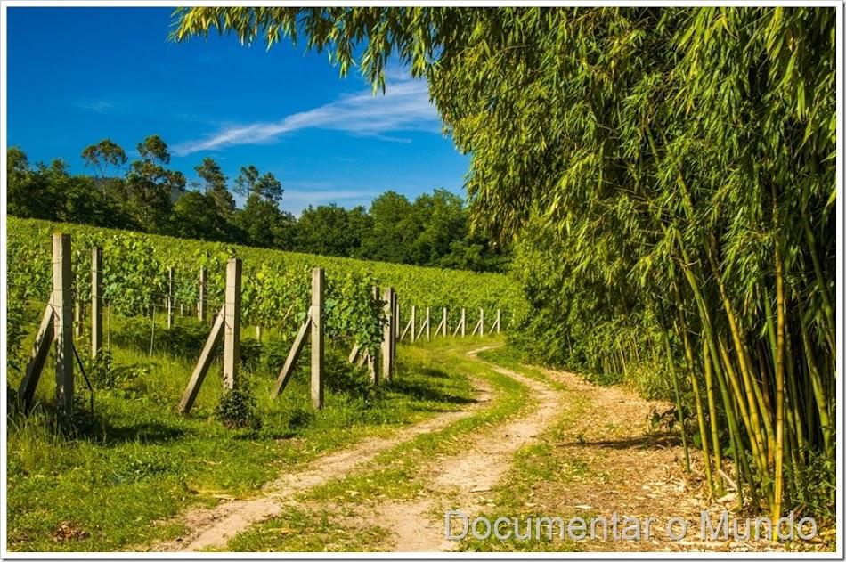 Quinta do Ameal, vinhos quinta do Ameal, vinho casta Loureiro, vinhos Ponte de Lima, enoturismo Ponte de Lima, vinhos Pedro Araújo