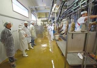 Développement de la production animale 300 vétérinaires en conclave à Mostaganem