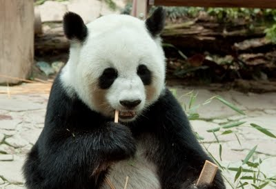 Guest Post: Google's Panda Update Good News for Writers