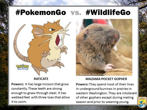 pokemongo-vs-wildlifego-5