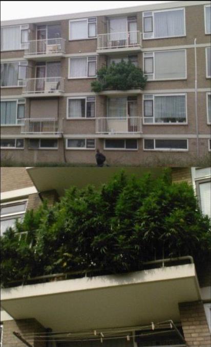 marihuana en el balcon
