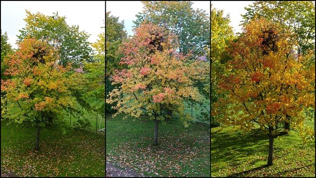 2018-10 October Autumn Colours