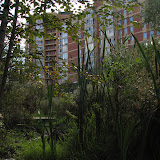 Рогоз у ручья