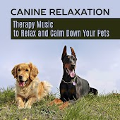 Canine Relaxation - Therapy Music to Relax and Calm Down Your Pets, Nature Sounds for Pet Spa (Singing Birds, Rainforest and Sea)