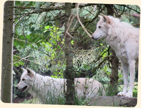 7-7 Zoo with Jack 12