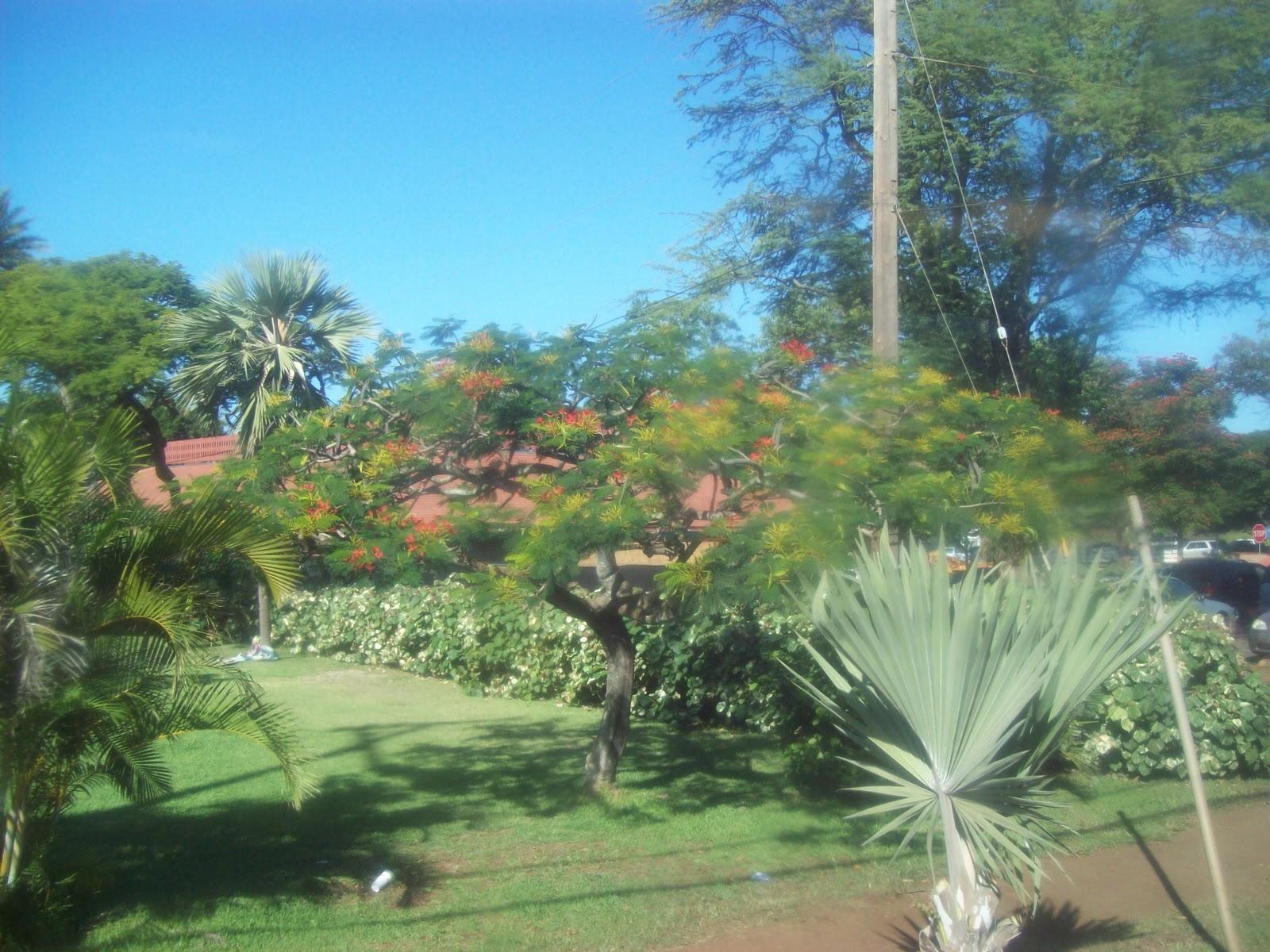 Hawaii Day 3 - 100_7005.JPG