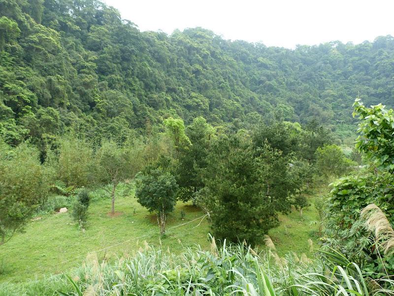 TAIWAN Taoyan county, Jiashi, Daxi, puis retour Taipei - P1260433.JPG