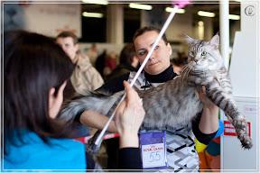cats-show-25-03-2012-fife-spb-www.coonplanet.ru-032.jpg