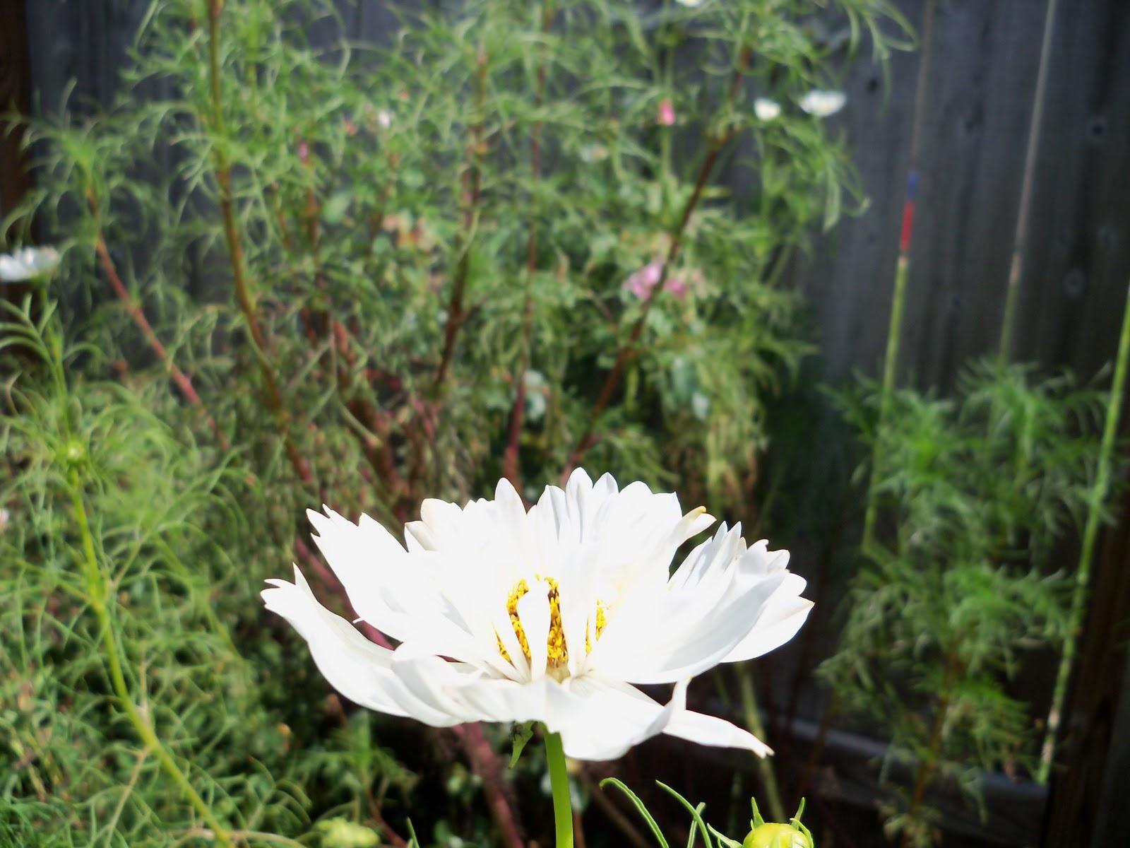 Gardening 2010, Part Three - 101_5074.JPG