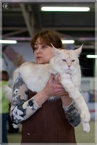 cats-show-24-03-2012-fife-spb-www.coonplanet.ru-037.jpg