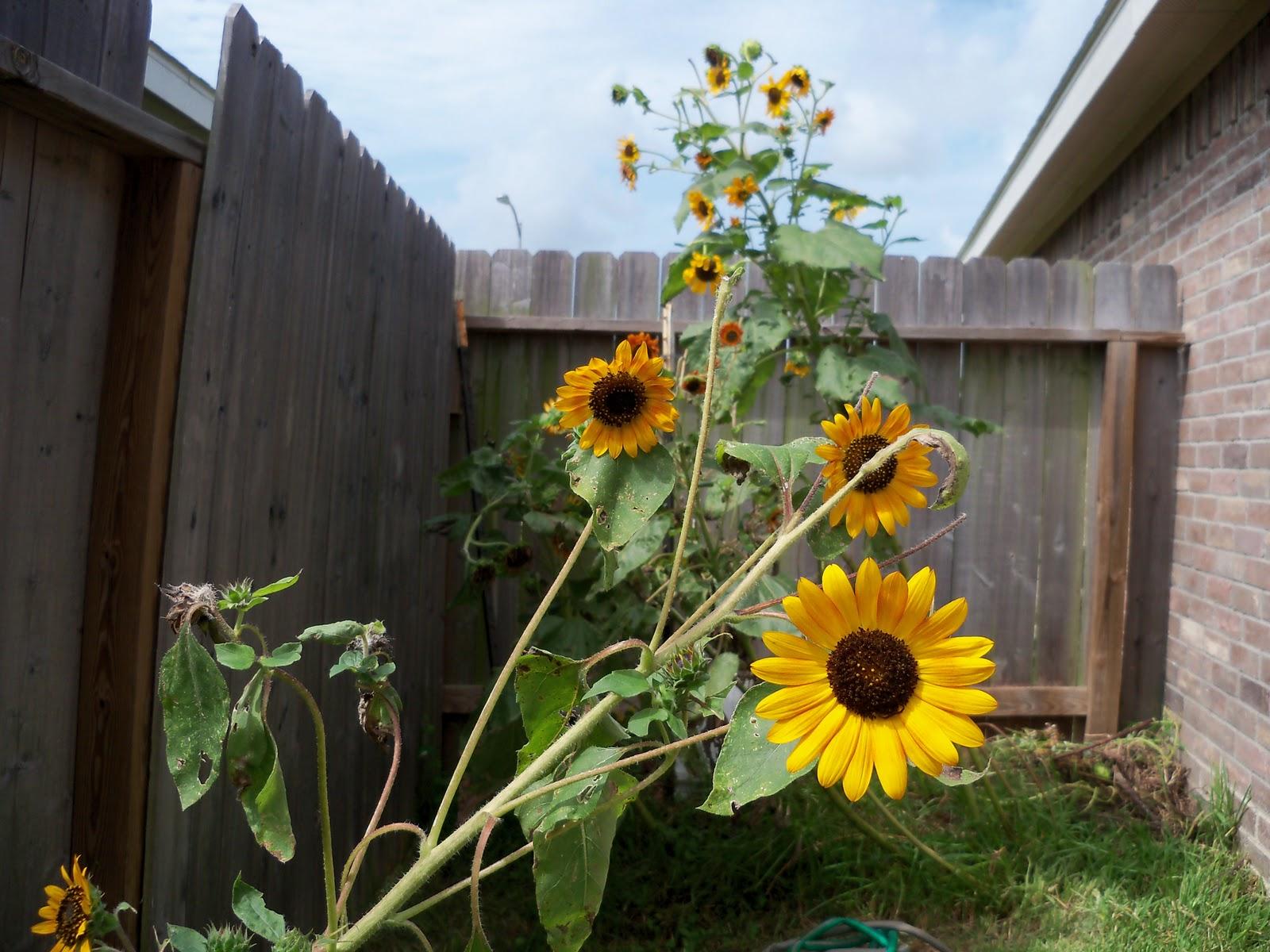Gardening 2010, Part Three - 101_5266.JPG
