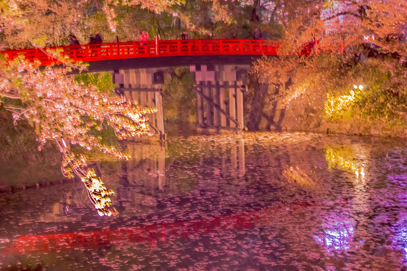 Hirosaki Park cherry blossoms illumination photo3