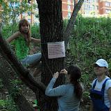 При закреплении дерево не портится
