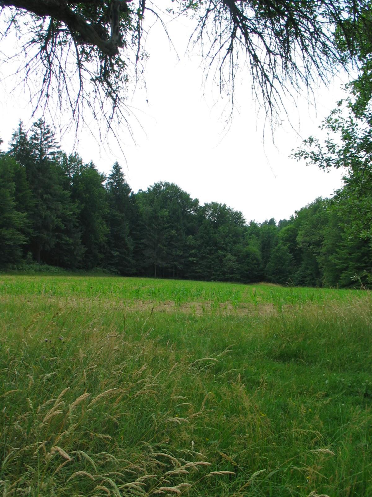 Državni mnogoboj, Slovenska Bistrica 2005 - Mnogoboj%2B2005%2B041.jpg