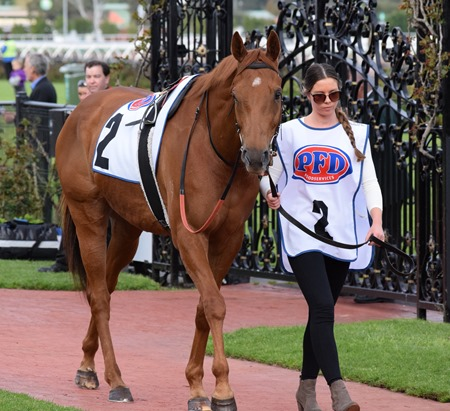 makybe diva_happy trails