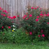 Gardening 2013 - 115_5656.JPG