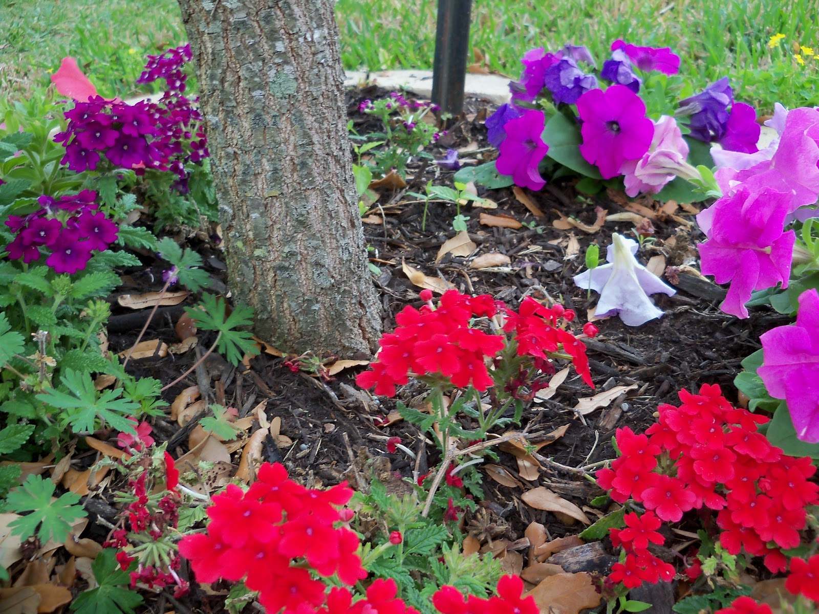 Gardening 2011 - 100_7025.JPG