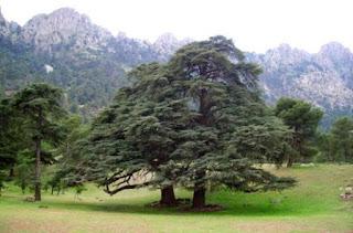 Tissemsilt: la forêt Aïn Antar, un paradis au pied de l'Ouarsenis