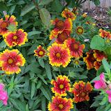 Gardening 2011 - 100_7312.JPG