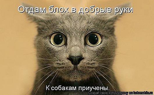 1430551523_kotomatricy-12