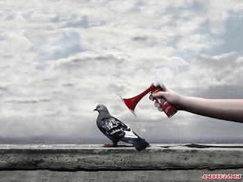 Tuyển chọn hình nền chim bồ câu trắng đẹp nhất mang ý nghĩa hạnh phúc hòa bình