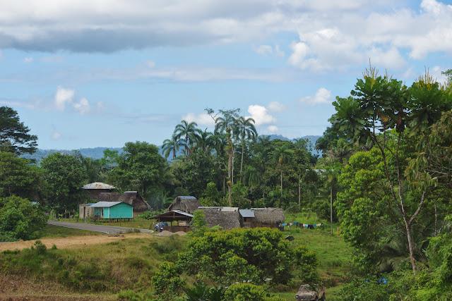 Guabal, 300 m (Veraguas, Panamá), 29 octobre 2014. Photo : J.-M. Gayman