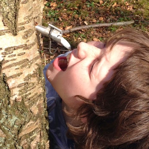 Birch Tapping - Foodie Quine - Spring Woodland & Coastal Foraging