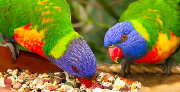 200+ Most Adorable Birds in the World 1
