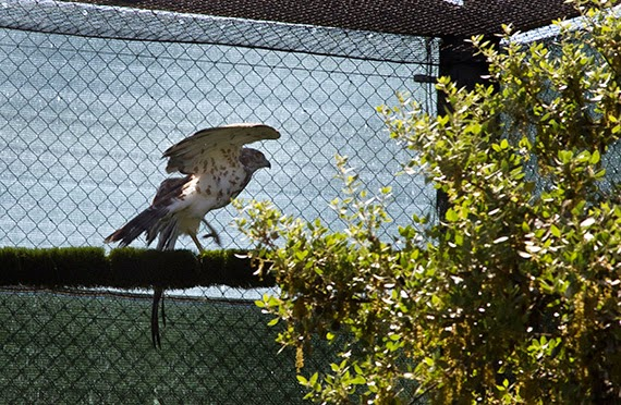 La Comunidad prueba un sistema pionero para evitar la electrocución de aves
