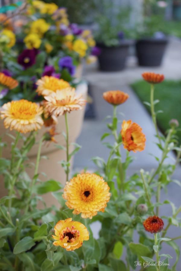 Highlights of the Early Summer Garden- www.gildedbloom.com