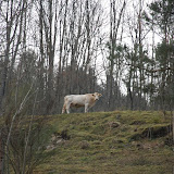 Sortida Castors i Llops a la Roca del Secut 2010 - DSC_0738.jpg