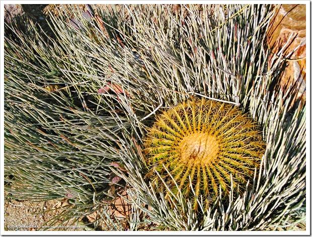 151230_Tucson_Mesquite-Valley-Growers_0004