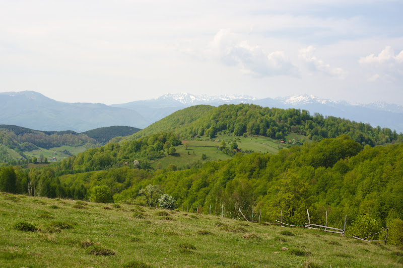 Poieni cocotate pe dealuri si din nou aceasi perspectiva catre Retezat.
