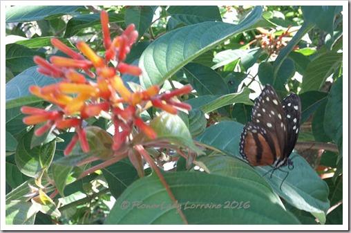 10-22-butterfly6