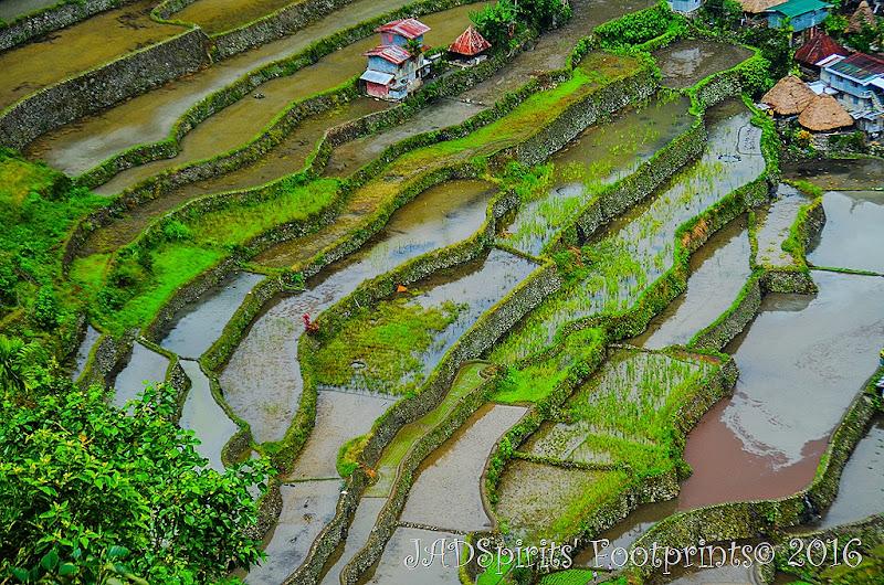 The closer shot of Batad Rice Terraces